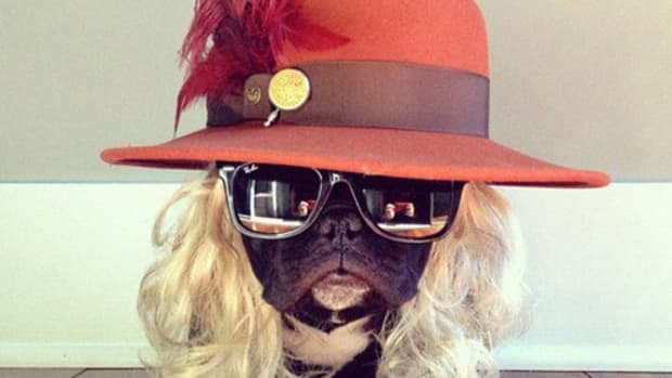 Dogs-Wearing-Silly-Hats-01