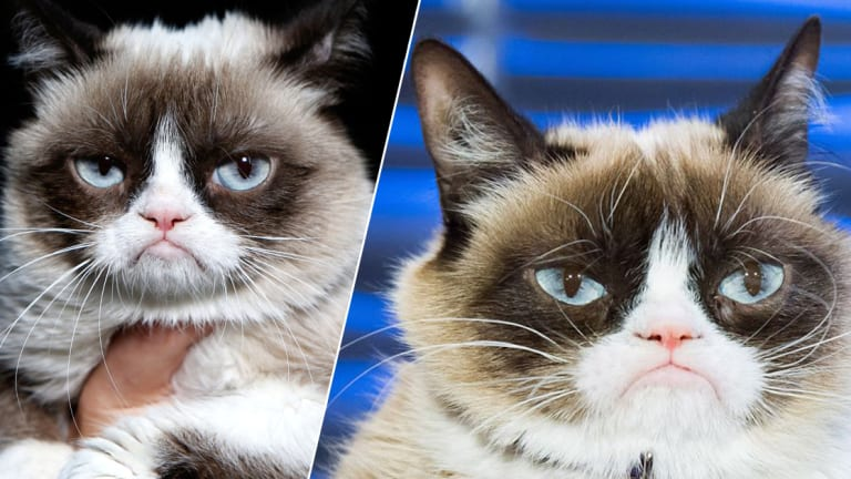 25 Grumpy Cat Tattoos, For The Internet Celebrity Sensation Who Passed Away at 7-Years Old