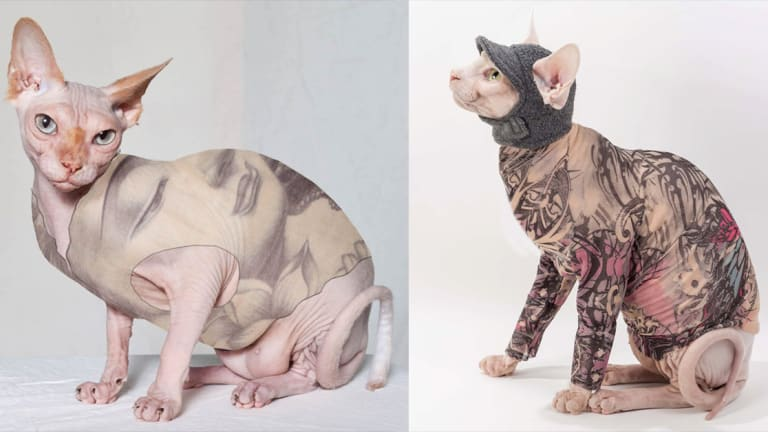 This Tattoos for Cats are Cruelty Free and Cute