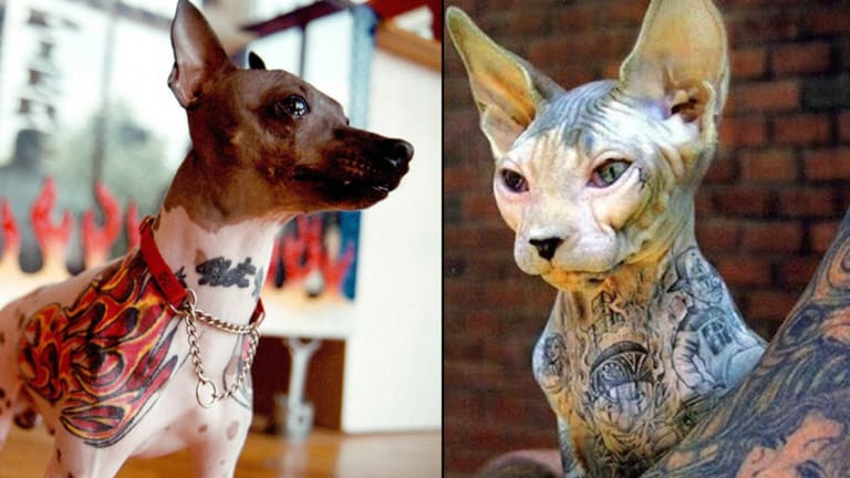 4 Year Anniversary Since New York Bans Pet Tattooing