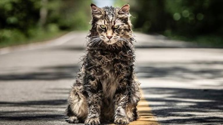 Meet the Tattooed Trainer Behind Pet Sematary's Kitties