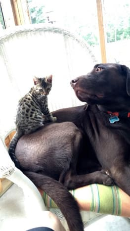 This kitty and puppy are the best of friends.