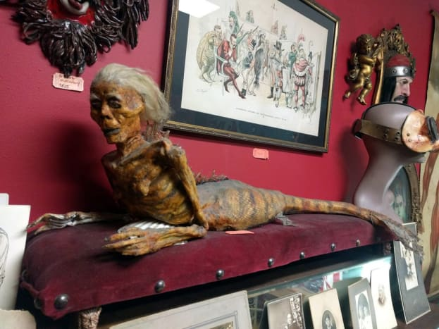 The original Fiji Mermaid was exhibited by P.T. Barnum in Barnum's American Museum in New York in 1842 and then disappeared. It was assumed that it had been destroyed in one of Barnum's many fires that destroyed his collections. This one comes courtesy of Bearded Lady Vintage & Oddities - Burbank, CA.