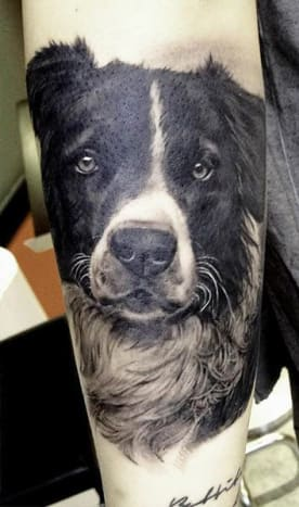 Australian Shepherd Dog Portrait Tattoo by Matteo Pasqualin