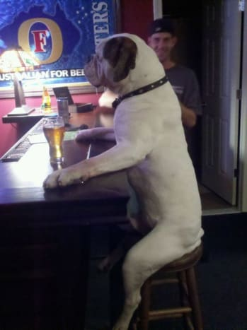 When the bitches got you down there is one place you can go, the bar.