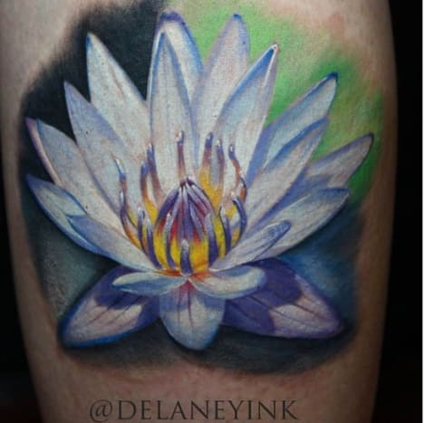 A water lily that Monet would surely be proud of