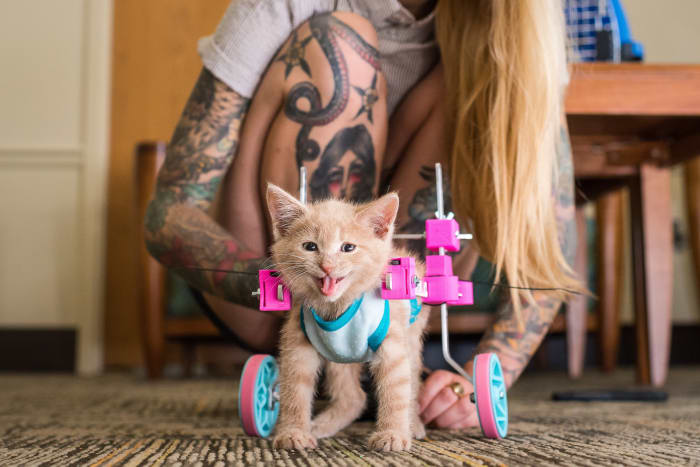 Hannah Shaw, Kitten Lady, Kitten Rescue, Inked Magazine, Inked Interview