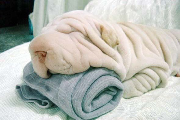 This little one looks like a towel.