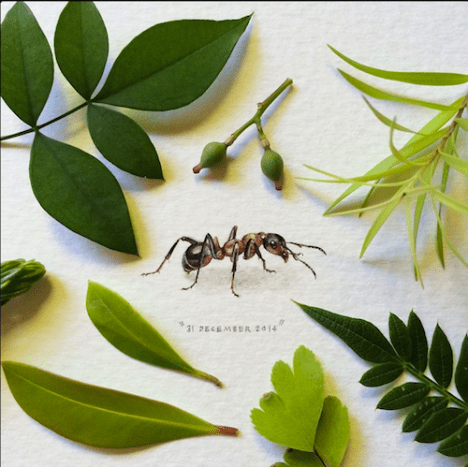 To start off with paintings for ants, how about a painting of an ant!