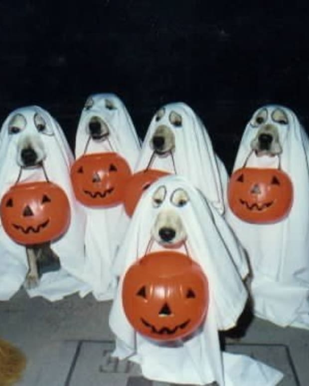 Charlie Brown Ghost Dogs