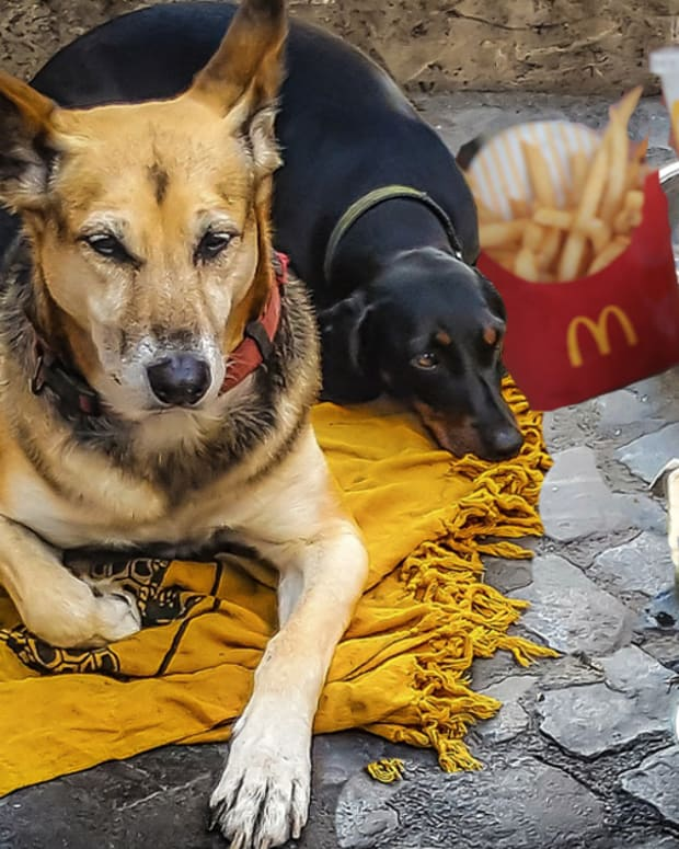 Dog pretends to be stray, fake stray dog, betsey reyes, dog hamburger, dog mcdonalds, princess dog