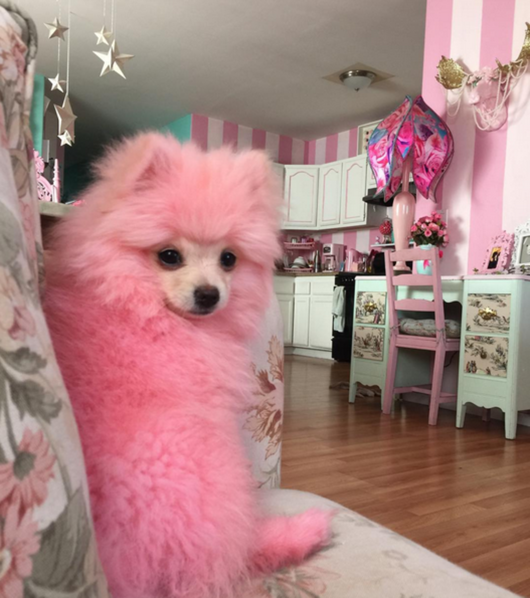 TOSHI IS PINK!!!