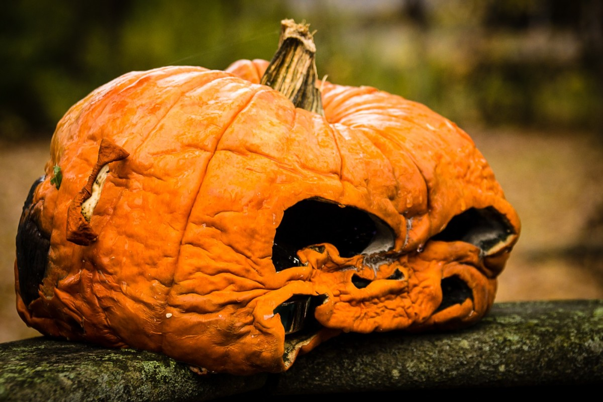 autumn_orange_fall_halloween_rotting_pumpkin_rotten-903506