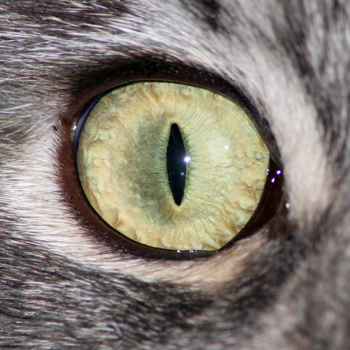 1500_px_cat_eye_by_hoschie_stock