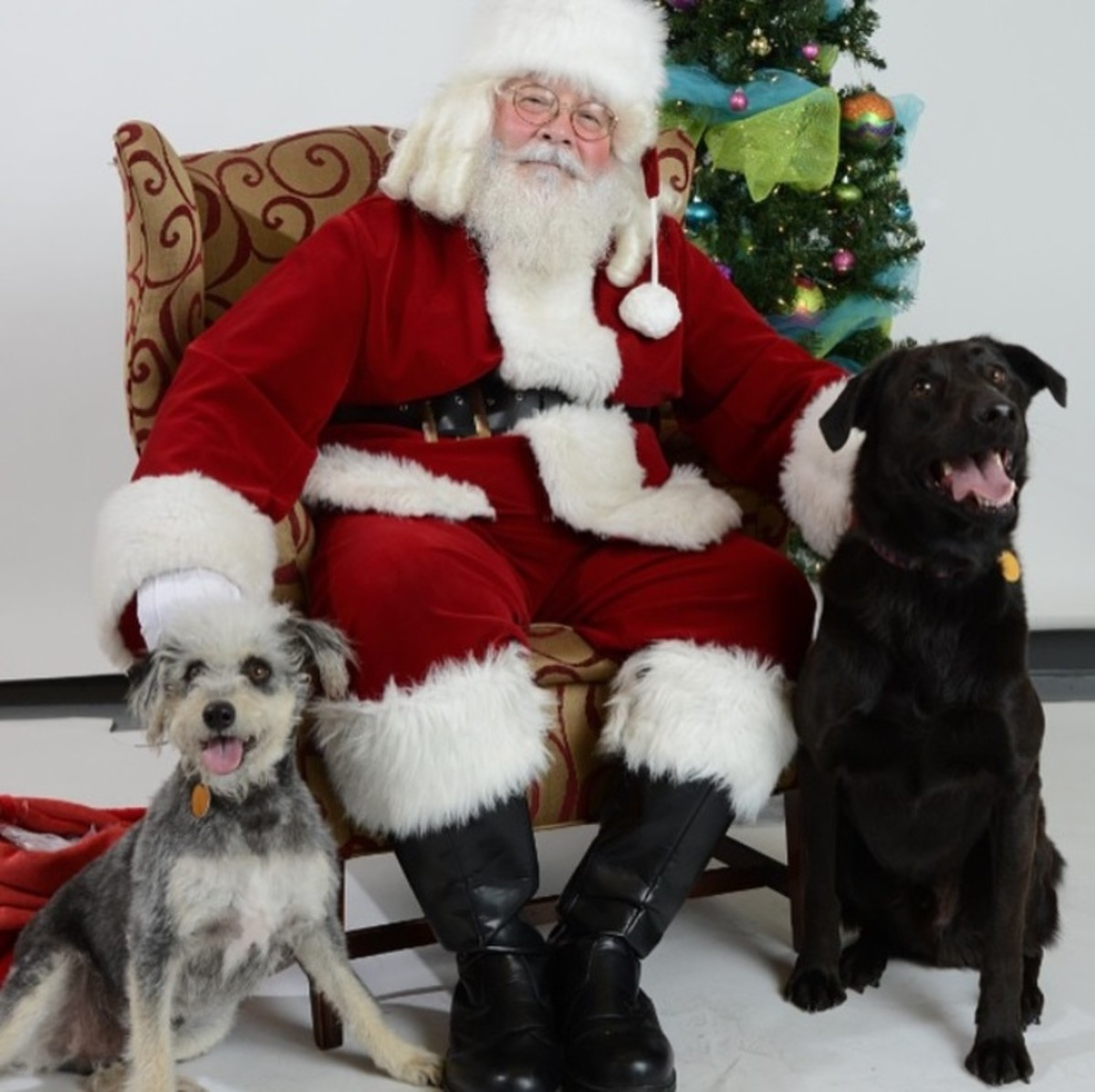 dogs-with-santa-holiday-pet-photos