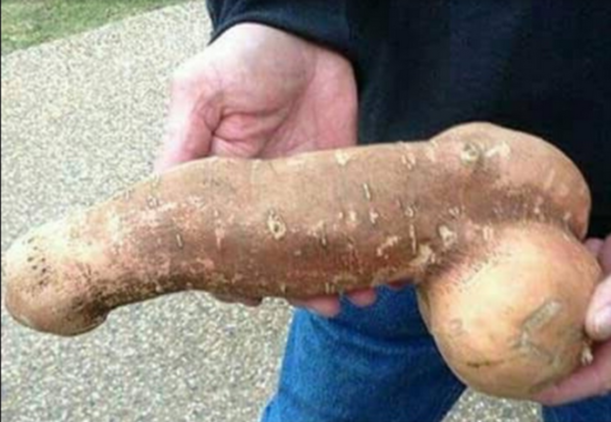potato-phallic